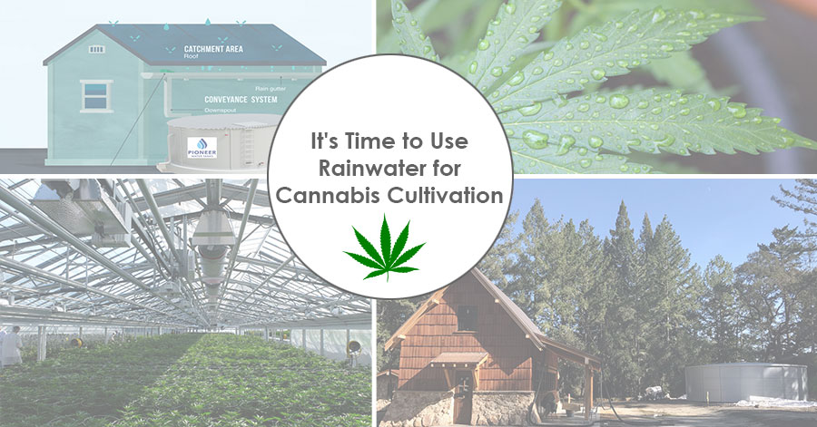 It's Time to Use Rainwater for Cannabis Cultivation